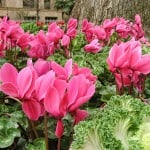 Tips on Weeding a Garden