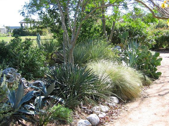 Xeriscaping in Texas | South Austin Irrigation Repair Austin, Dripping Springs, Buda, Wimberley Tx